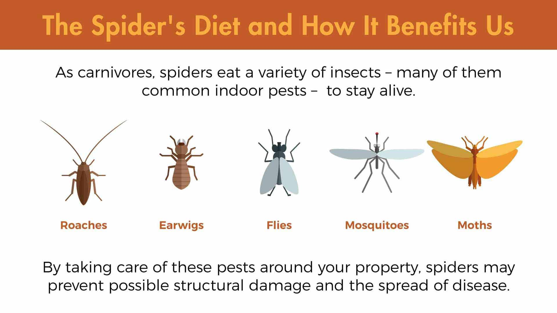 So Long, Spiders: Making Infestations a Thing of the Past ...