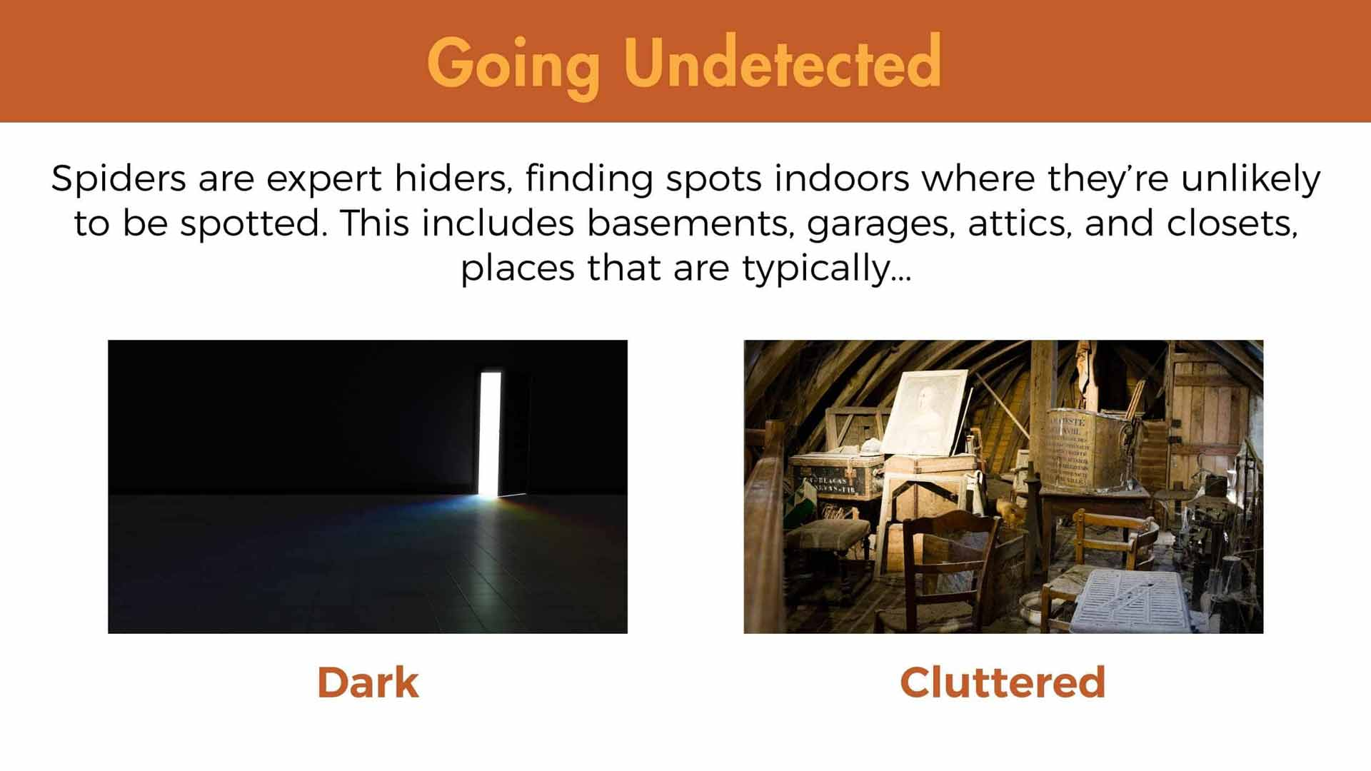 Spiders are expert hiders, finding spots indoors where they're unlikely to be spotted. This includes basements, garages, attics, and closets, places that are typically dark and cluttered.