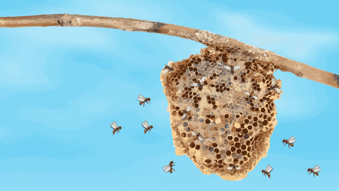 Illustration featuring bees flying around their beehive attached to a tree branch.