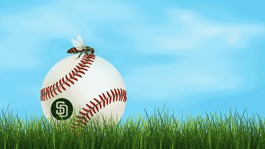 Illustration featuring a queen bee sitting on top of a San Diego Padres baseball.