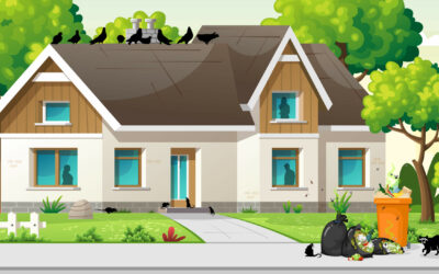 How COVID-19 Can Attract Pests to Your Home