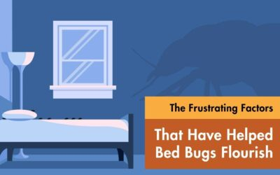The Frustrating Factors That Have Helped Bed Bugs Flourish
