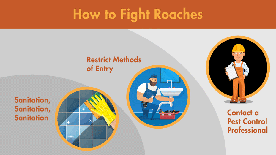 Illustration detailing how to fight roaches, including sanitation, restricting entry points, and contacting a pest professional at Lloyd.