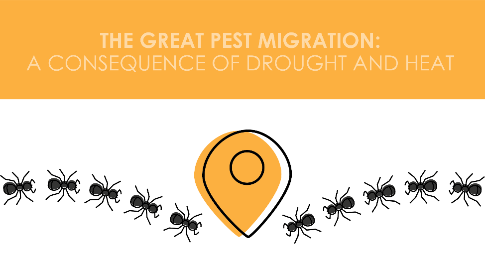 The Great Pest Migration: A Consequence of Drought and Heat