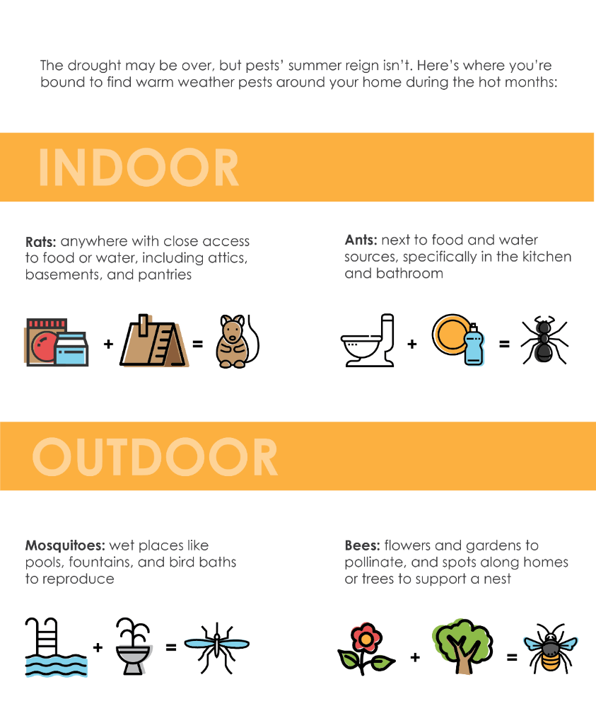 The drought may be over, but pests' summer reign isn't. Rats can be found in attics, basements, and pantries. Ants can be found in kitchens and bathrooms. Mosquitoes can be found in pools, fountains, and bird baths. Bees can be found in gardens and spots along homes or trees where they may build a nest.