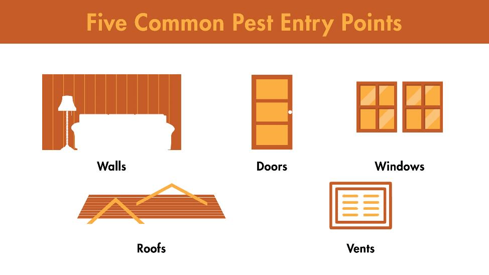 Five common pest entry points include walls, doors, windows, roofs, and vents.