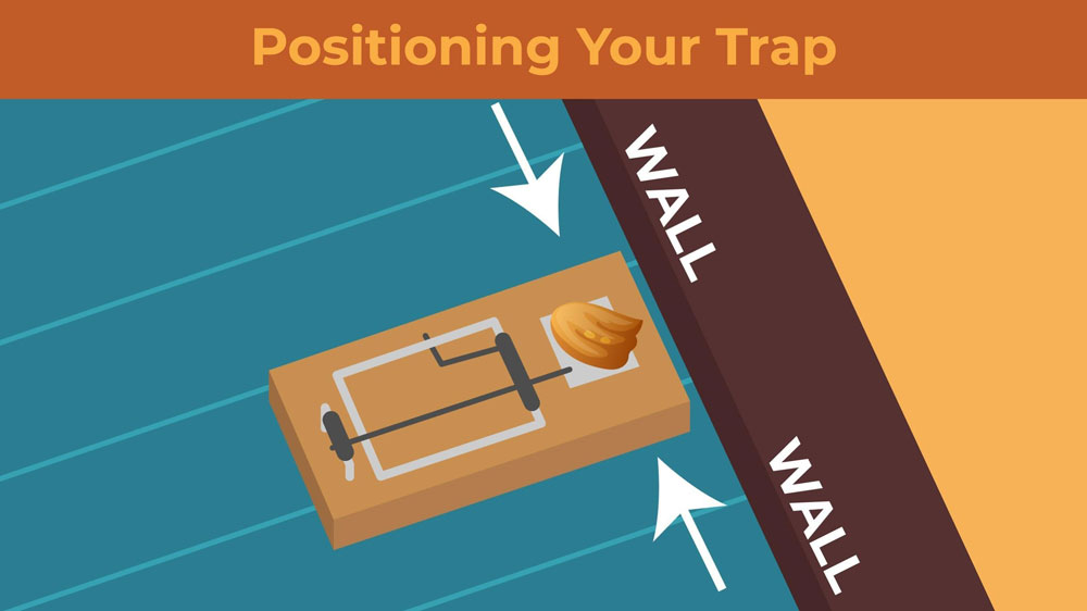 Illustration featuring proper snap trap placement along a wall.