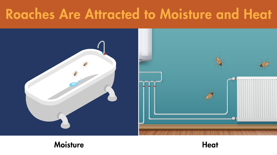Illustration of roaches crawling in an empty bathtub and next to a radiator.