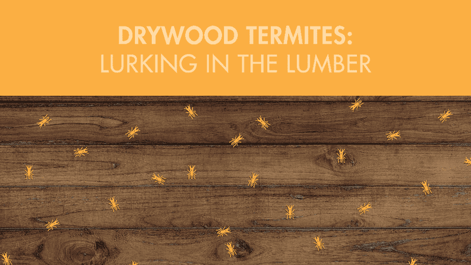 Drywood Termites: Lurking in the Lumber