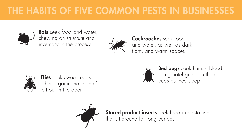 Five common pests in businesses include: rats, cockroaches, flies, bed bugs, and stored product insects. Rats seek food and water, chewing on structure and inventory in the process. Cockroaches seek food and water, as well as dark, tight, and warm spaces. Flies seek sweet foods or other organic matter that's left out in the open. Bed bugs seek human flood, biting hotel guests in their beds as they sleep. Stored product insects seek food in containers that sit around for long periods.