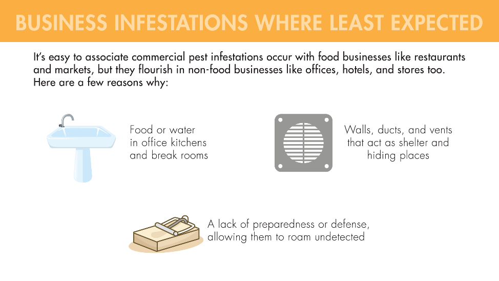 It's easy to associate commercial pest infestations with food businesses like restaurants and markets, but they flourish in non-food businesses like offices, hotels and stores too. That's because office kitchens and break rooms provide food and water. In addition, walls, ducts, and vents act as shelter and hiding places, and a lack of preparedness or defense allows them to roam undetected.