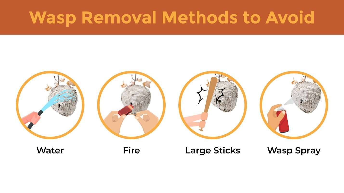 Illustration featuring circular icons denoting wasp removal methods to avoid.