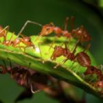 Ants Crawling On Leaf