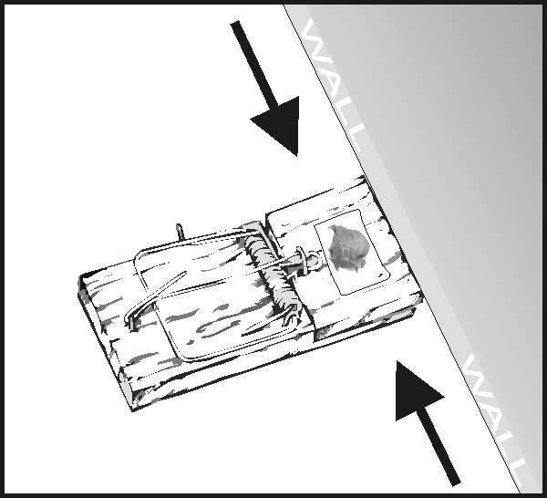 Place a mousetrap perpendicular to the wall so that you catch the mouse from either way