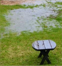 Water pooling in backyard