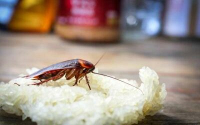 Don't Let Roaches Ruin Your Rep