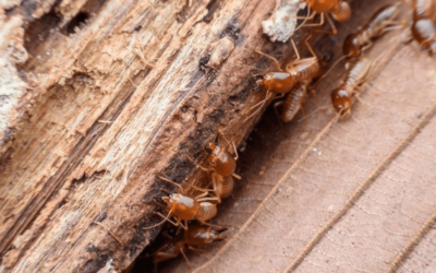 What Are Chemical Free Alternatives to Getting Rid of Termites?