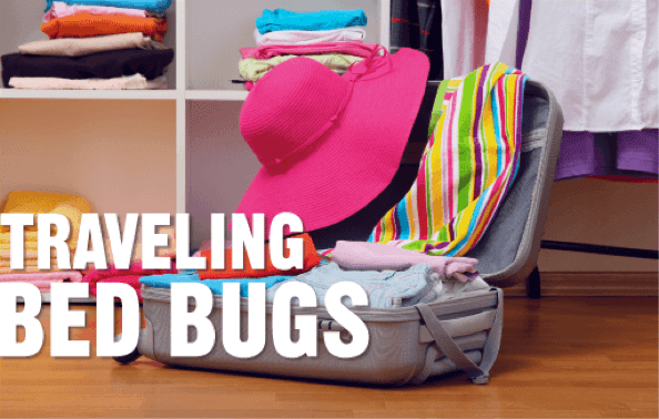 traveling bed bug graphic